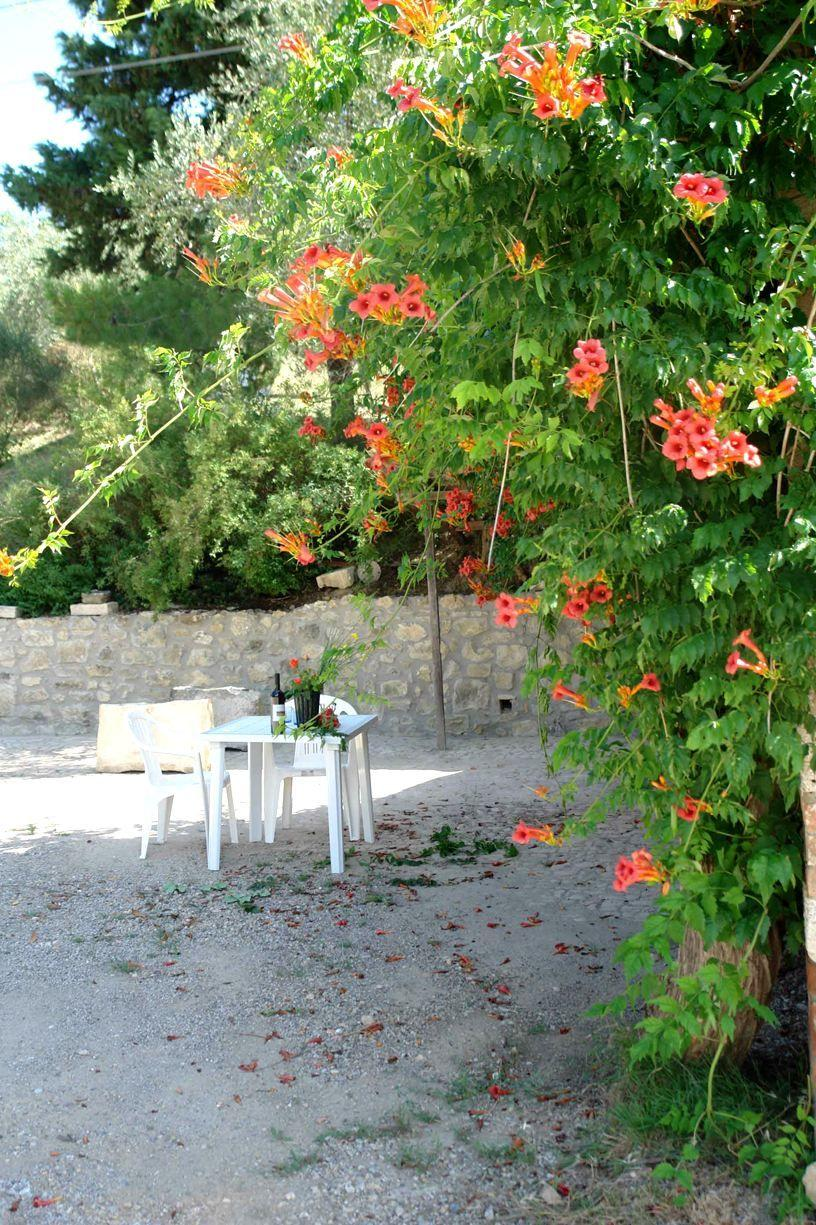 Apartment Tenuta Le Sodole - Holiday Home Il Glicine photo 31807526